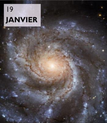 leurs formes en spirale autour d'un noyau central sont emblématiques.
