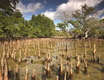 La lagune oubliée