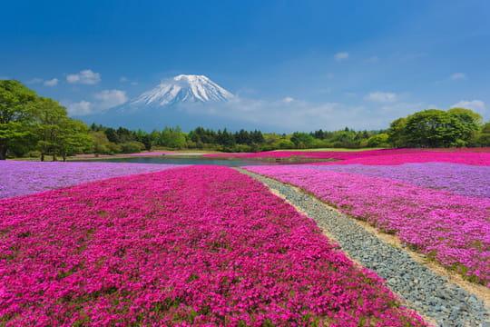 Passer sa retraite au Japon: démarches, visas, avantages... Les infos