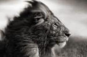 Portraits rapprochés d'animaux sauvages