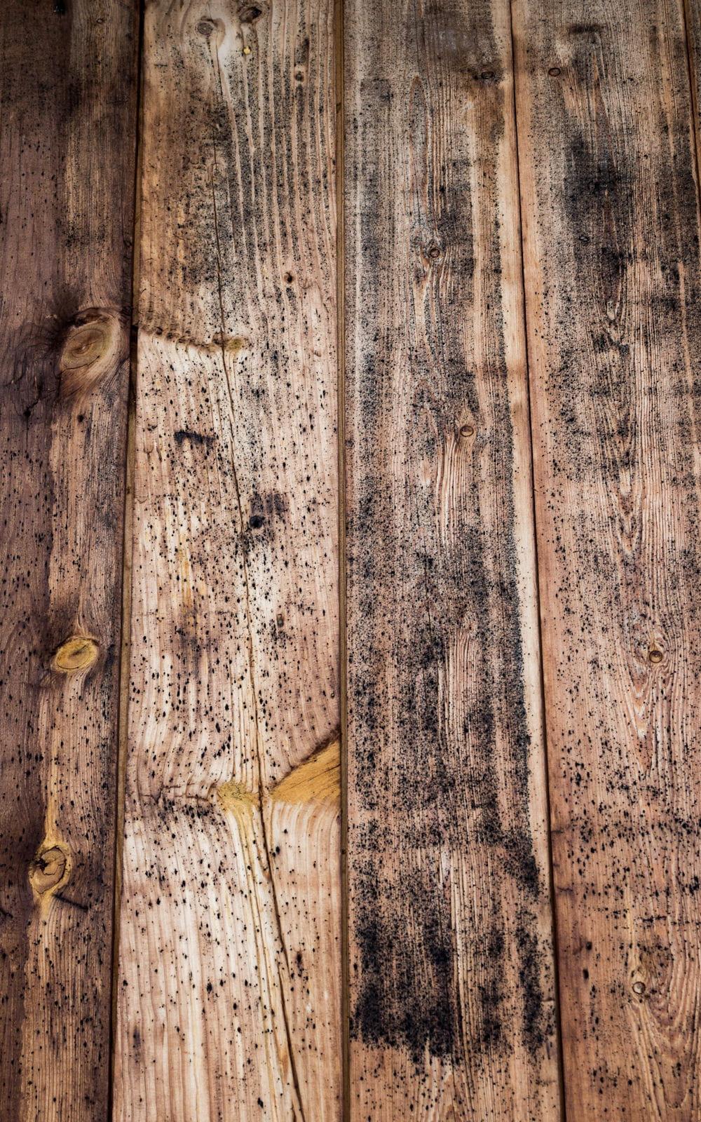 Comment Traiter Du Bois Brut enlever la moisissure sur du bois