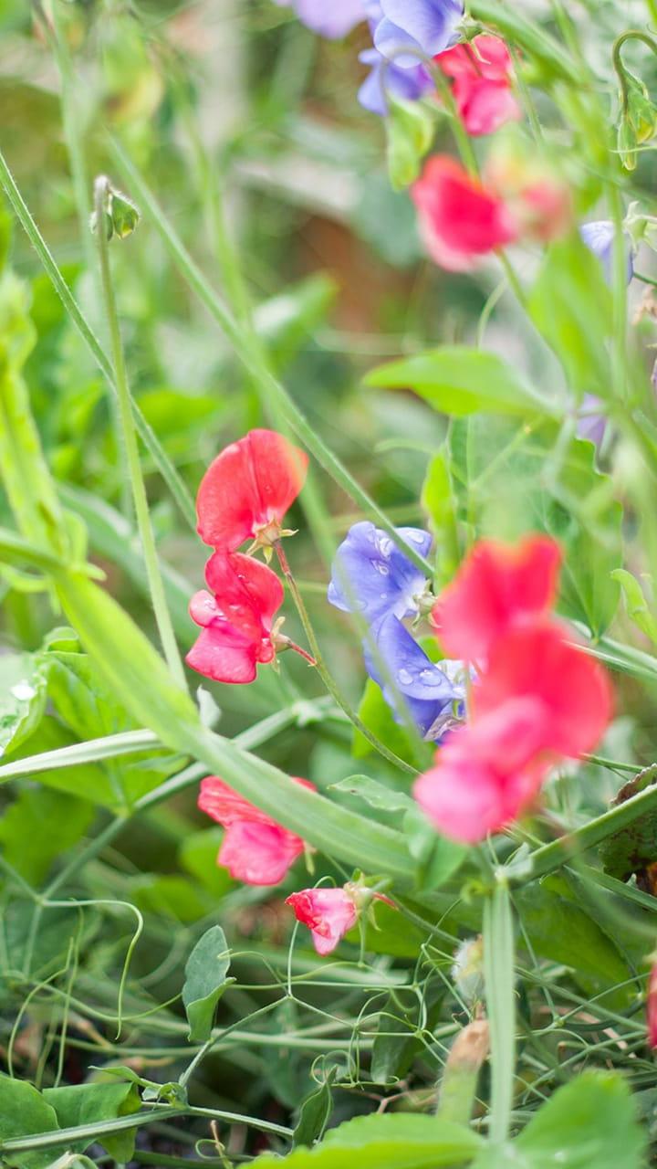 Quand Faut Il Semer Les Tournesols 20 fleurs faciles à faire pousser