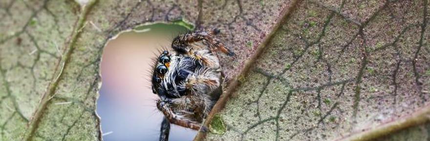 20 portraits d'araignées en macro