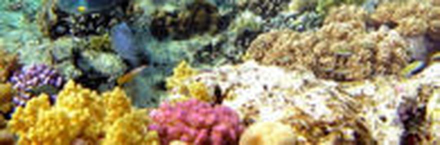 Le monde coloré des coraux
