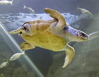 L'aquarium du bout du monde : Histoires de tortues