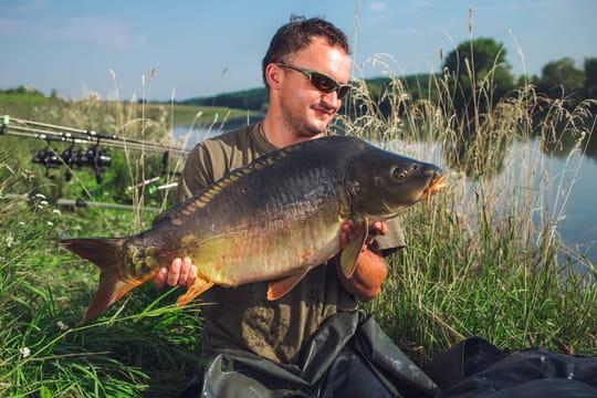 Pêche à la carpe: conseils pour apprendre