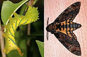 Les incroyables transformations des animaux