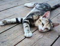 L'incroyable Dr Pol : De nouveaux chats dans le quartier