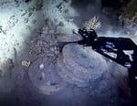 Enquêtes en eaux profondes