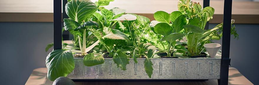 15objets pour jardiner à l'intérieur