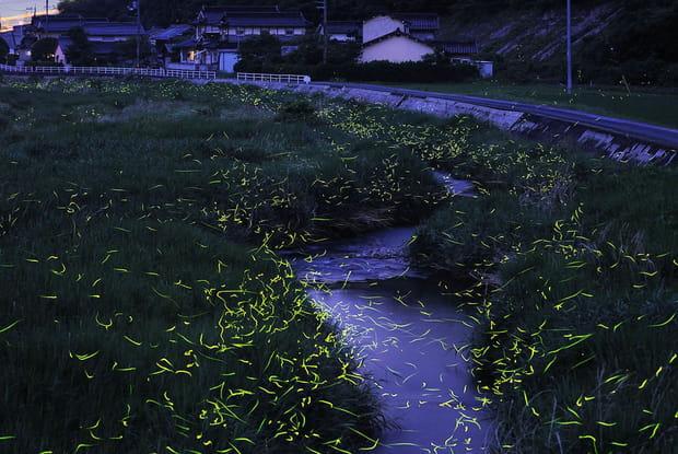 Les lucioles de Mino-o au Japon