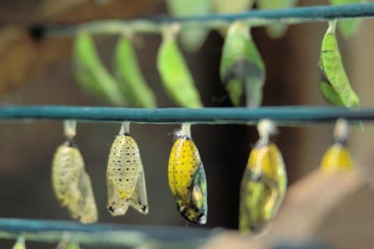 Naturospace: préparer votre visite à Honfleur