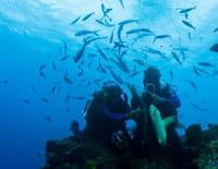 Coup mortel : Sale temps pour les requins