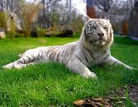 Zoo : dans les secrets des naissances extraordinaires