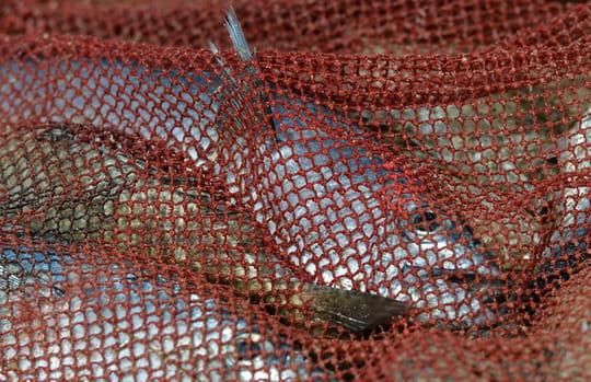 """Un """"cri de détresse"""" pour rendre audible la souffrance des animaux marins"""