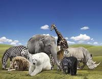 Les grands animaux d'Asie : Le lion