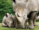 Naissances au zoo : au secours des espèces en danger