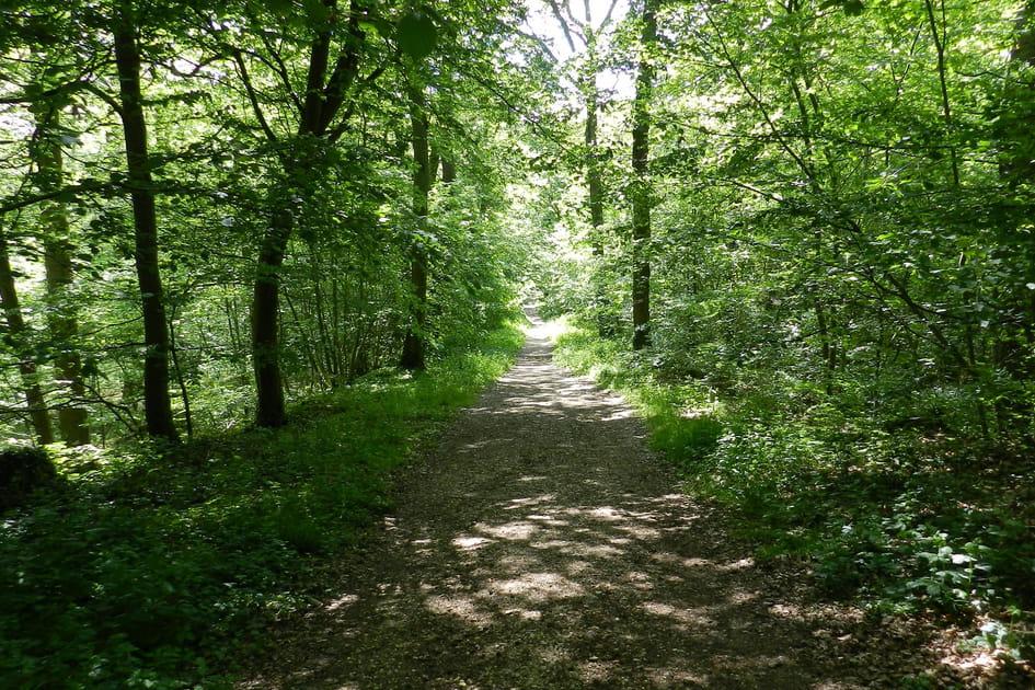 Forêt de Meudon, Hauts-de-Seine