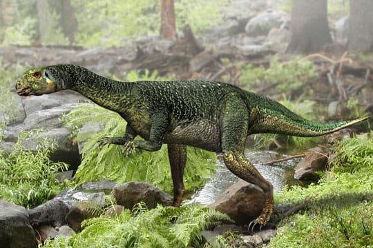 Le dryosaure