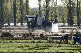 Pesticides et glyphosates: où en consomme-t-on le plusen France? [CARTE]