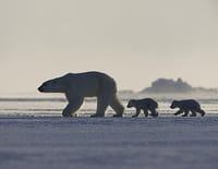 Terres de glace : Le réveil du printemps