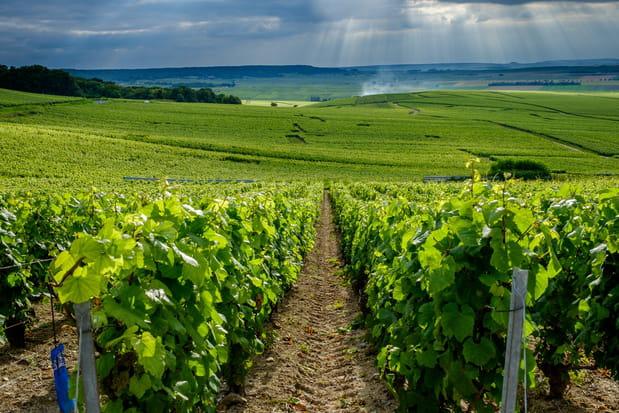 Les incontournables de la région Champagne-Ardennes