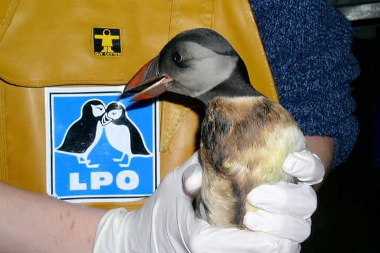 65 000 oiseaux collectés