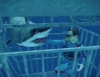 Danger de mort : Attaque de requin
