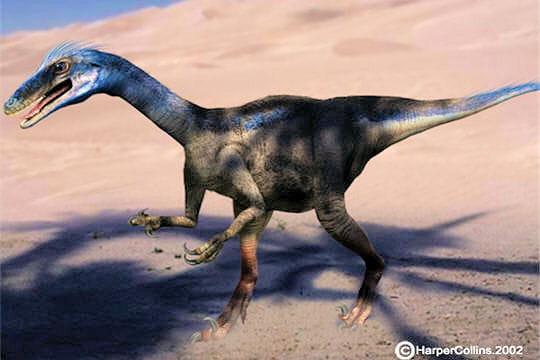 Un dinosaure aux allures de poulet