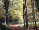 Les forêts du Québec en 4 couleurs