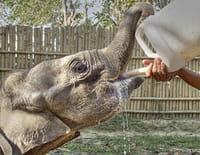 Reportage GEOlino : Les éléphants du mont Kenya