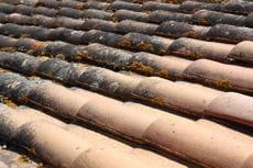 pour éviter les infiltrations, enlevez les mousses sur vos toits.