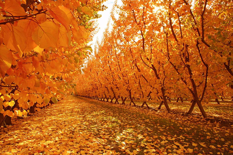 voir la vie en orange