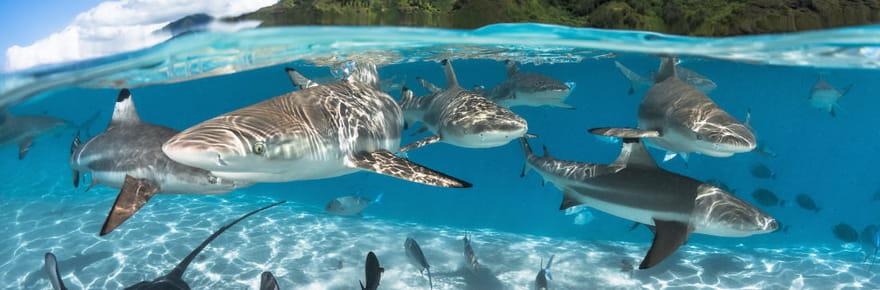 Festival mondial de l'image sous-marine: les merveilles du monde aquatique