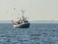 Homards : pêche à haut risque : L'heure de vérité