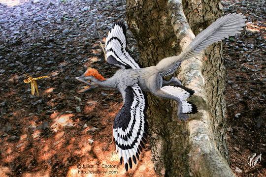 Dinosaure à plumes