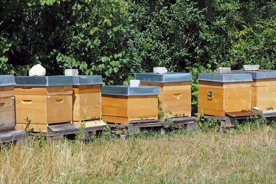 Choisir l'emplacement d'un rucher