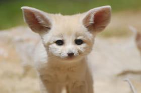 Les plus belles naissances dans les zoos