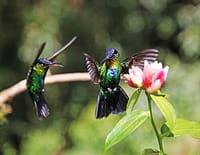La fabuleuse histoire de l'évolution : Costa Rica