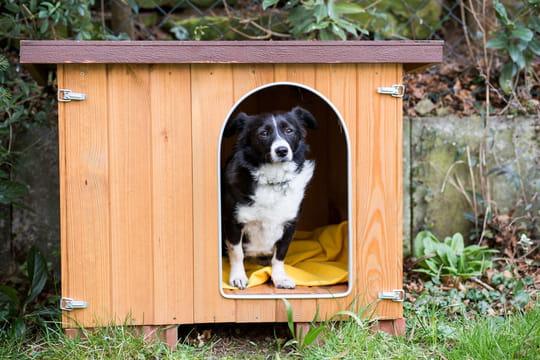 Niche pour chien: comment bien la choisir