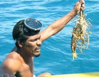 360°-GEO : Nicaragua, la malédiction des pêcheurs de langoustes