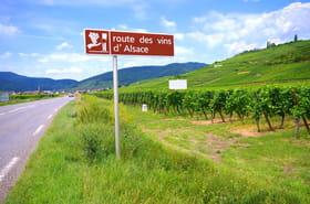 Sur la route des vins de France
