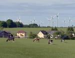 Sur les traces du sauvage : La région de l'Eifel