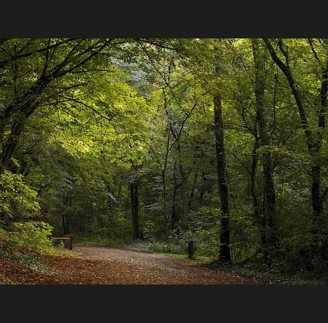 Près de Metz, le vert persiste...