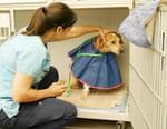 Urgences Animales
