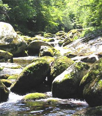 les rivières se chargent en nutriments tout au long de leur parcours.