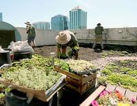 Sur les toits des villes : Buenos Aires