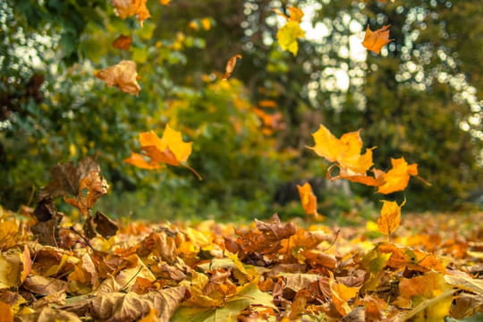 Equinoxe d'automne:les secrets de la date de l'automne