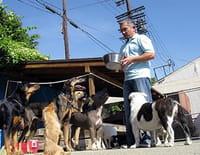 César, l'homme qui parlait aux chiens : Luna la peureuse et les chiens renifleurs