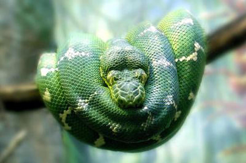 Dormez avec des reptiles dans un zoo allemand